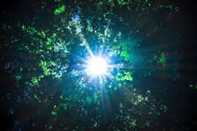 Sun Rays Pass Through Foliage Trees
