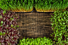 Microgreen Of Wheat, Amaranth, Beets And Basi On Black Background. Texture Of Green Stems Close Up. Copy Space And Free Space For Text Near Plants.