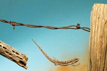 A Lizard Jumping Off A Fence. .