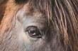 canvas print picture - Pferd / Pony / Auge