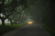 Car Travels Down Foggy Road In The Summer, Maine