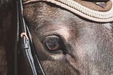 Pferd / Auge / Detail