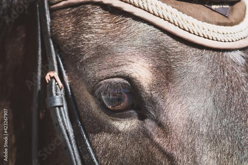 Canvas Print Pferd / Auge / Detail
