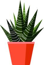 Haworthia Fasciata. Zebra Plant Isolated On White Background. Vector Illustration. Exotic Succulent Plant Haworthia Fasciata On White. Typical Room Plant Sucgrown Indoors For Home Decoration.