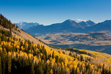Crisp Fall Air And Sunshine Make The Aspen Trees Glow In Golden Sunlight Before Sunset In The San Juan Mountains In Telluride, Colorado.