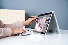 Graphic Designer Artist Drawing On Digital Tablet