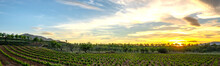 Panoramic View Of High Altitude Vineyards, Landscape With Vineyards And Mountains At Sunset.