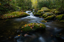 Single Leaf And Moss Covered Boulder In Stream