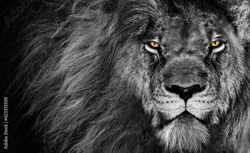Billede på lærred Lion king , Portrait Wildlife animal