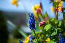 The Beautiful Wild Flower In The Spring Garden.