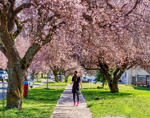 Girl walking on sidewalk lined with cherry blossoms Fotobehang