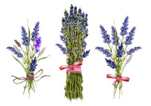 Three Exquisite Watercolor Bouquets In The Style Of Provence Made Of Lavender Flowers, Spikelets And Wild Grass Tied With A Pink Ribbon And Natural Twine. Hand-drawn Lavender Flowers.