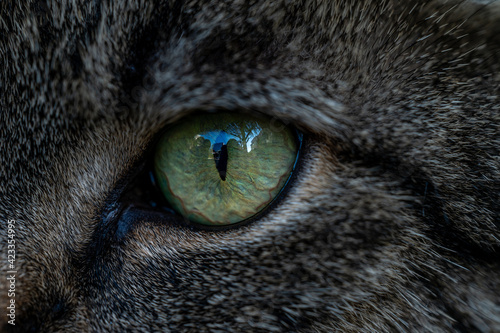 Foto close up of a cat eyes