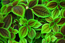 Unusual Trippy Plant, Green Leaves Texture