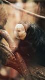 Fototapeta Zwierzęta - smutna małpa w klatce w zoo na gałęzi patrzy w bok