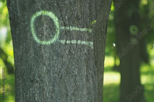 Fototapeta Oznakowane drzewa zieloną farbą w lesie  obraz