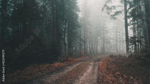 Fototapeta Leśna droga w gęstej mgle. obraz