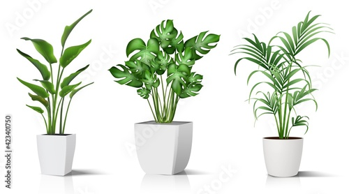 Valokuva Collection of 3d realistic vector icon illustration potted plants for the interior