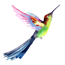 Small Tropical Bird Hummingbird In Flight On A White Background. Hand Drawn Watercolor For Design Postcards, Fabric, Background, Textile, Packaging, Wallpaper, Print.