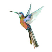 Tropical Bright Little Hummingbird Bird In Flight With Outstretched Wings On A White Background. Hand Drawn Watercolor For Design Postcards, Fabric, Background, Textile, Packaging, Wallpaper, Print.