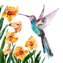 A Small Tropical Bird Hummingbird With Spread Wings Flies Among Flowers On A White Background. Hand Drawn Watercolor For Design Postcards, Fabric, Background, Textile, Packaging, Wallpaper, Print.