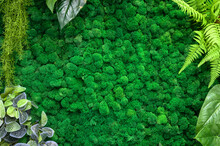 Vertical Garden Background, Green Moss In Office Or Home Interior For Wallpaper.