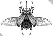 Engrave Isolated Rhinoceros Beetle Hand Drawn Graphic Illustration