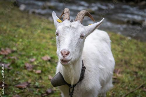 Koza, Dolina Kwaczańska, młyny, Słowacja