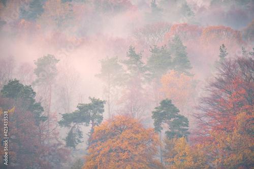 Fotografie, Obraz Close up of early morning mist in trees, Longshaw, Peak District, UK