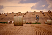 Bales Of Straw On A Large Hilly Field