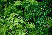 うっそうと生い茂るシダ植物の葉