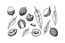 Set Of Hand Drawn Lychee Fruits And Leaves Isolated On White Background. Vector Illustration In Detail Sketch Style