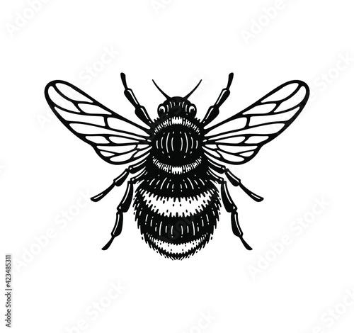 Fotografering illustration of honey bee in style doodle vintage design