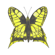 Yellow Butterfly Clipart. Watercolor Butterfly Isolated On A White Background. Hand-drawn Exotic Insect For Your Design. Colorful Logo Or Tattoo Design.
