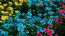 Multicolored Flower Background. Floral Wallpaper With Yellow, Turquoise And Pink Roses. 3D Render