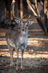 beautiful deer standing in a forest