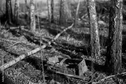 Fototapeta Koszyk w lesie obraz