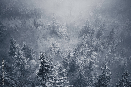Fototapeta Drzewa za mgłą obraz