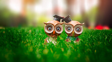 Lovely Owl Dolls Decoration On The Grass