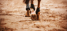 A Bay Horse Walks Through The Arena, Stepping With Shod Hooves On The Sand. Equestrian Sports.