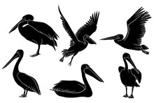 Hand Drawn Silhouette Of Pelican