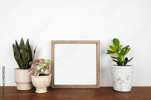 Fényképezés Mock up wood square frame with a variety of houseplants