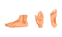 Body Parts With Foot, Palm And Ankle Vector Set