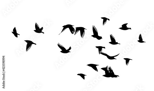 Fotografering A flock of flying birds. Vector illustration