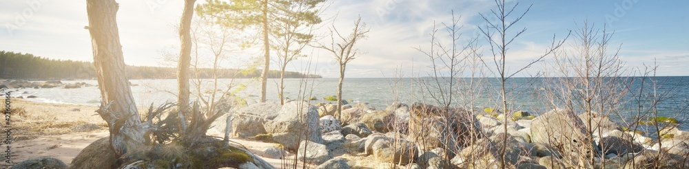 Fototapeta Rocky shore of the Baltic sea under a clear blue sky with cirrus clouds. Ancient stones. Spring. Kasmu nature reserve, Estonia. Ecology, environmental conservation, ecotourism concepts. Panoramic view