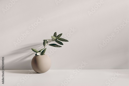 Obraz Modern summer still life photo. Beige ball shaped vase with green olive tree branch in sunlight with long shadows.Beige table wall background. Empty copy space. Elegant lifestyle Mediterranean scene. - fototapety do salonu