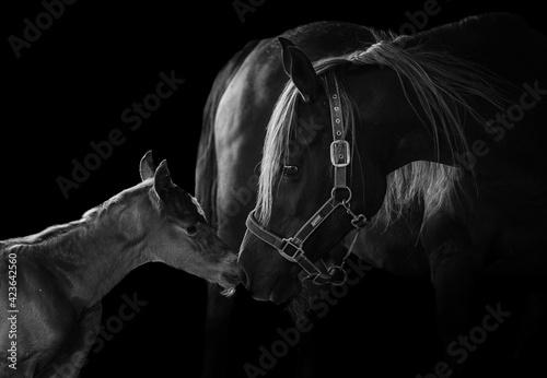 Obraz na plátne Animal Photography