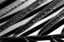 Palm Leaf On Dark Background, Closeup