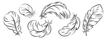 Feathers Of Different Shapes In The Sketch Style. Vector Isolated On A White Background.