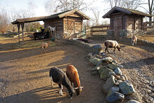 Sheep Farm With Feeding Hut,